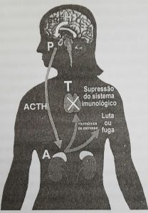 estresse-sistema-imunologico