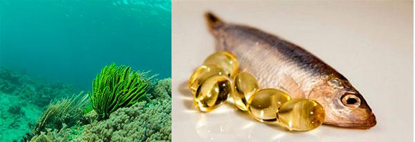 omega 3 algas marinhas