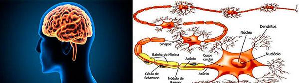 omega 3 e neuronios