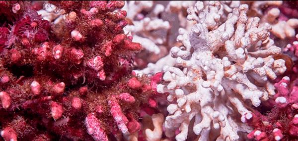 cloreto de magnesio alga lithotanium